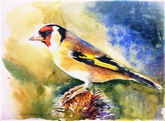 LittleBird#4