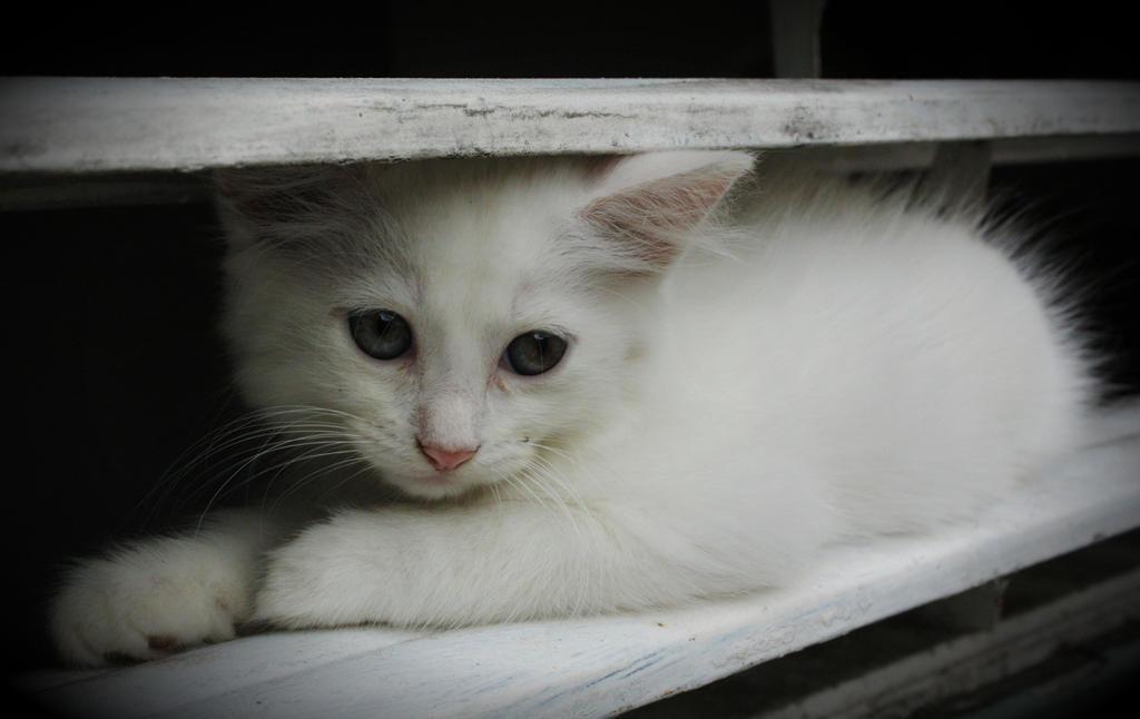 Window Kitty by iTrojan427