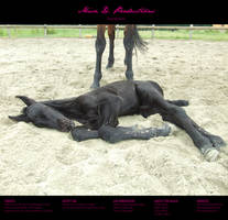 Horse stock 42 - Friesian by MiszD