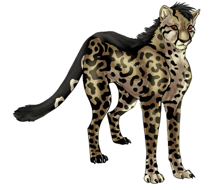 Anime King Cheetah Pictures, Images & Photos | Photobucket