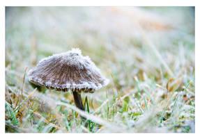 Frosty Morning by GoaliGrlTilDeath