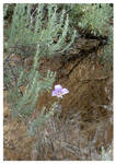 'Desert Bloom'