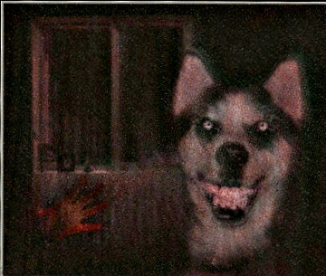 The Original Smile.jpg Dog by TempestPataki