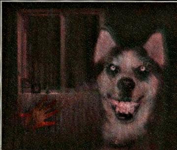 The Original Smile.jpg Dog by TempestPataki