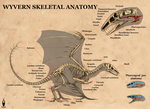 Wyvern skeletal anatomy