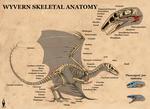 Wyvern skeletal anatomy