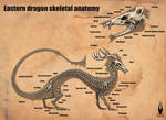 Eastern dragon skeletal anatomy