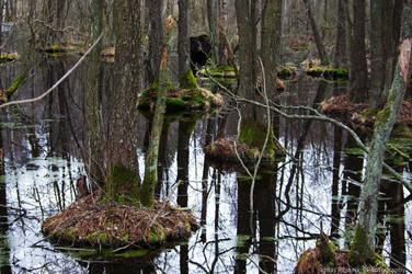 Swamp by Ignas357