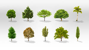 Free Trees Vector Pack