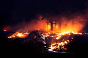 our hearts ablaze by alimarije