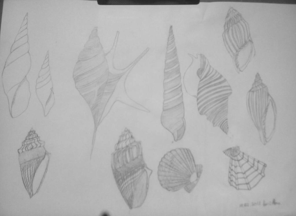Seashells by ciucamona