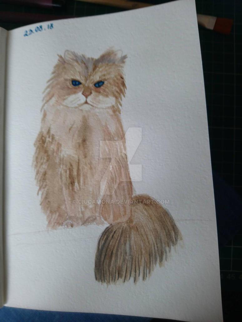 cat by ciucamona