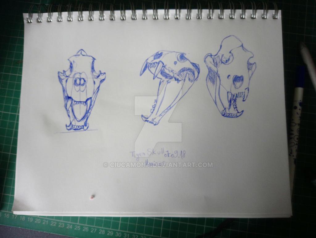 tiger skull studies  by ciucamona