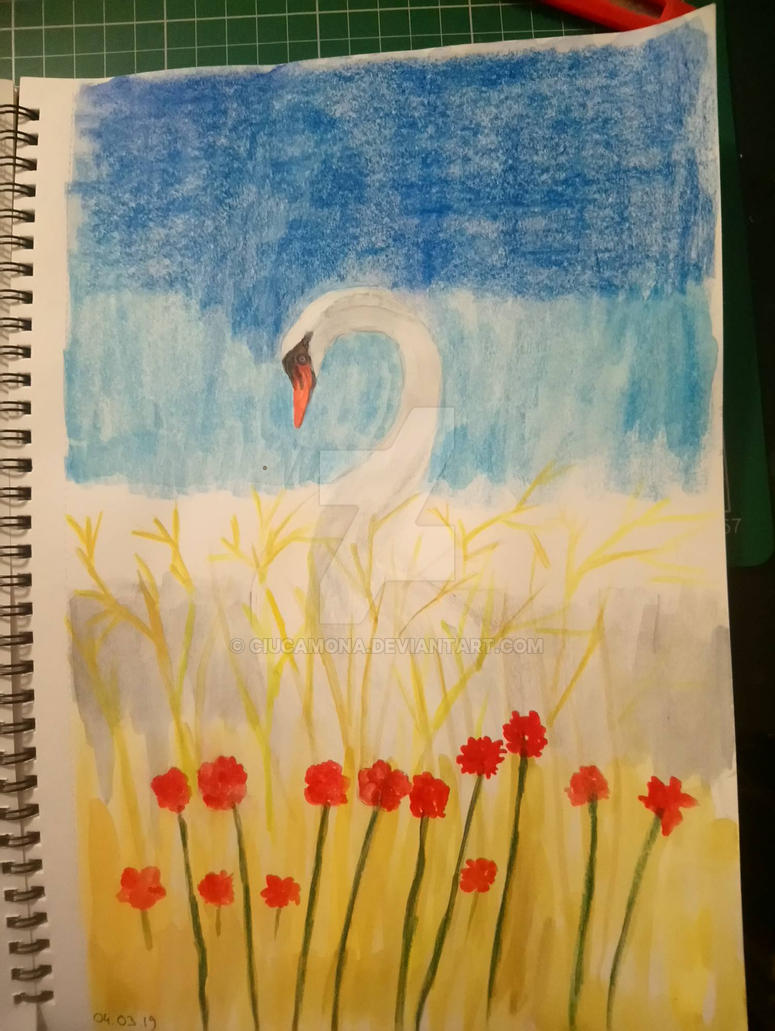 Swan on Lake  by ciucamona
