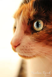 Kissa by Lamia86