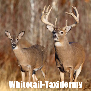 Whitetail-Taxidermy's Profile Picture