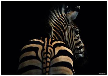A zebra's back by KlaraDrielle
