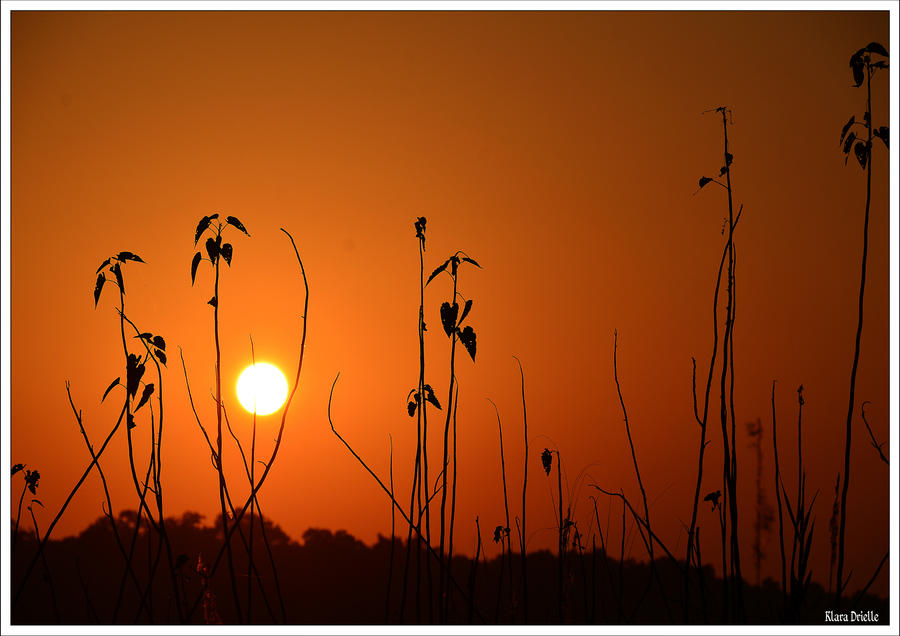 Sunset Park Chitwan Nepal by KlaraDrielle