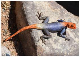Lizard rock red-tailed by KlaraDrielle