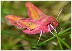 Encounter with a mysterious pink butterfly
