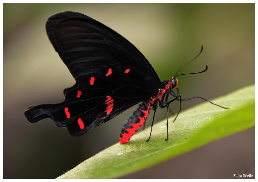 Butterfly evening dress by KlaraDrielle