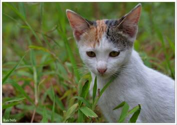 Kitten by KlaraDrielle