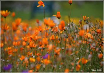 Glory of nature by KlaraDrielle