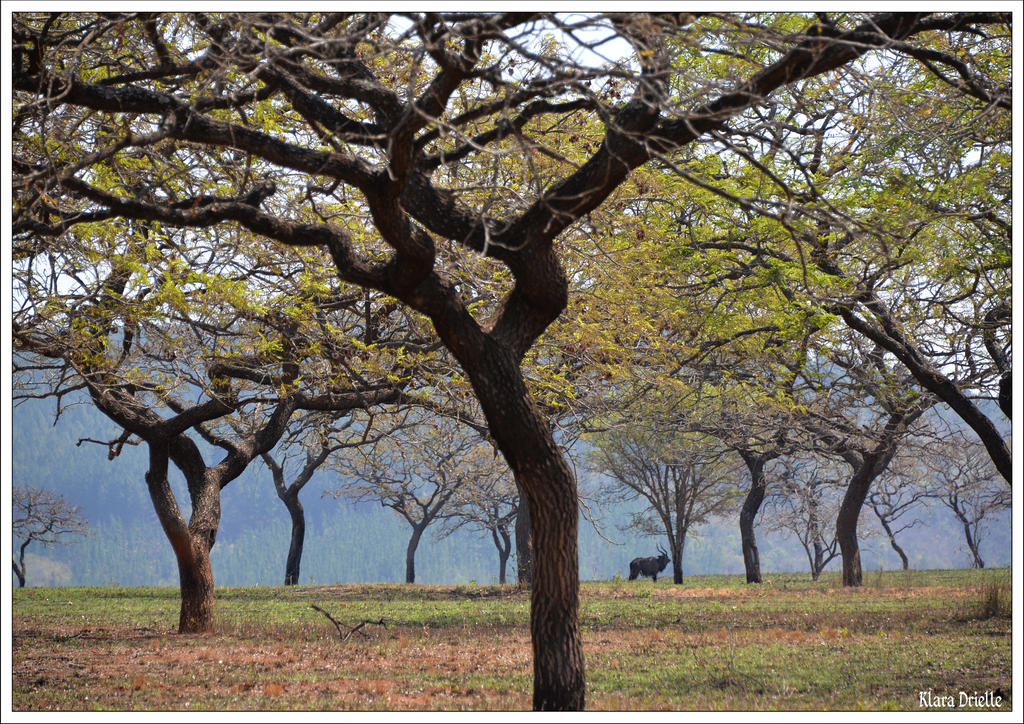 Swaziland by KlaraDrielle