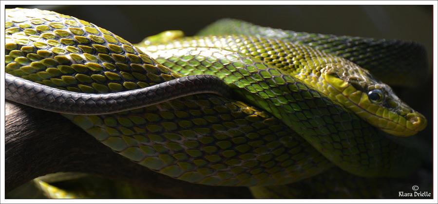 Penang snake temple by KlaraDrielle