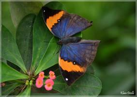 Free like a butterfly
