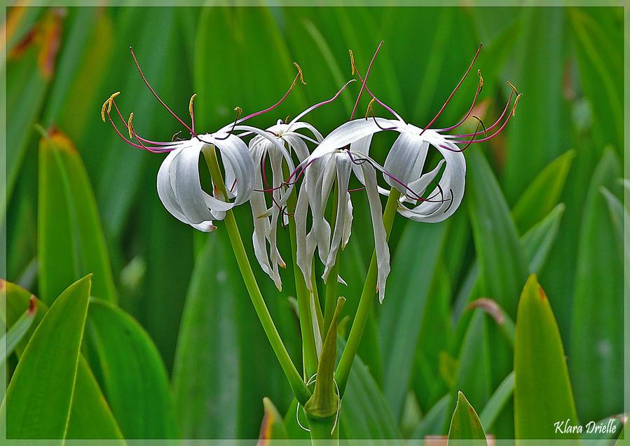 Exotic spring by KlaraDrielle