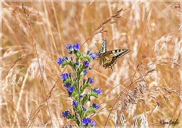 Butterfly season by KlaraDrielle