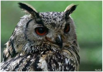 Eagle owl by KlaraDrielle