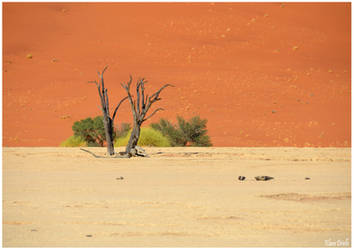 Desert et nature by KlaraDrielle