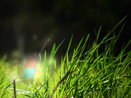 Windows Orb ball in wild grass by AbhishekGhosh