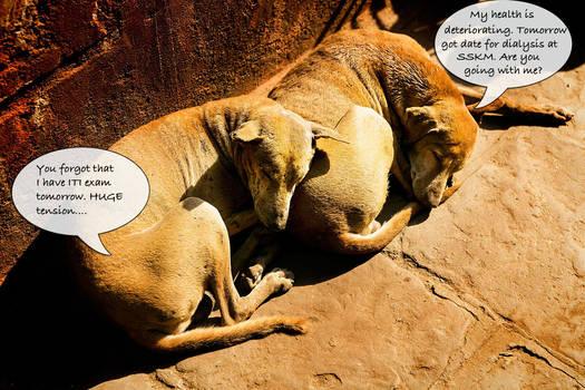 Royal Bengal Dogs