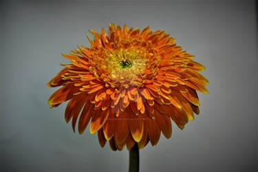 Flower2 - Sony A68