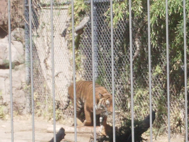 Tiger 2 by ObscurusVII
