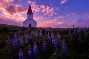 Sunrise in Vik, Iceland by paulmp