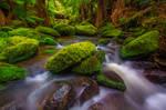 Otways Rainforest