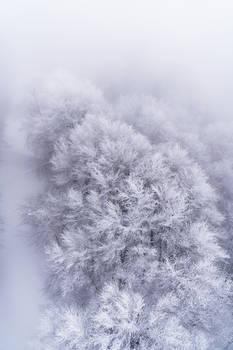 Tohoku Trees