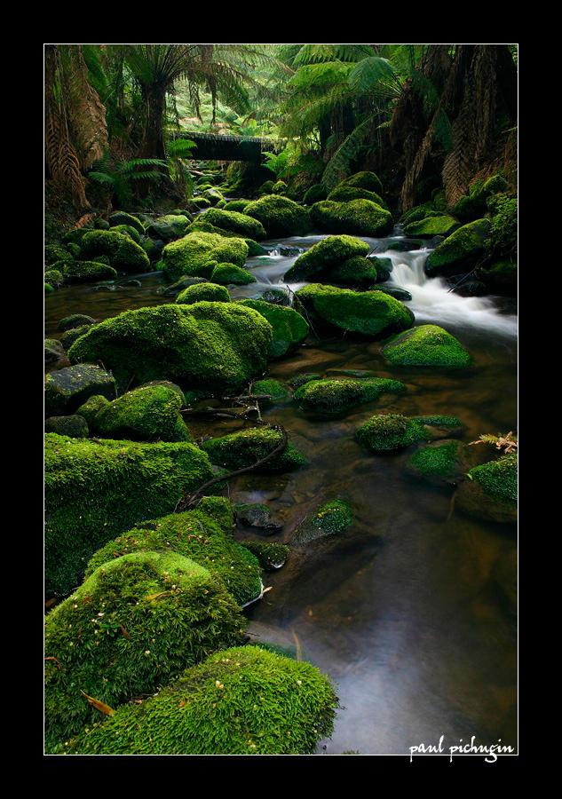 Rainforest Water II by paulmp