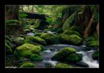 Rainforest water III