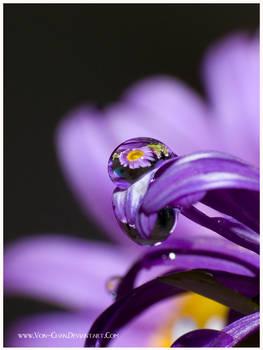 MACRO. Purple 5