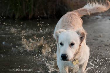 dog days 8