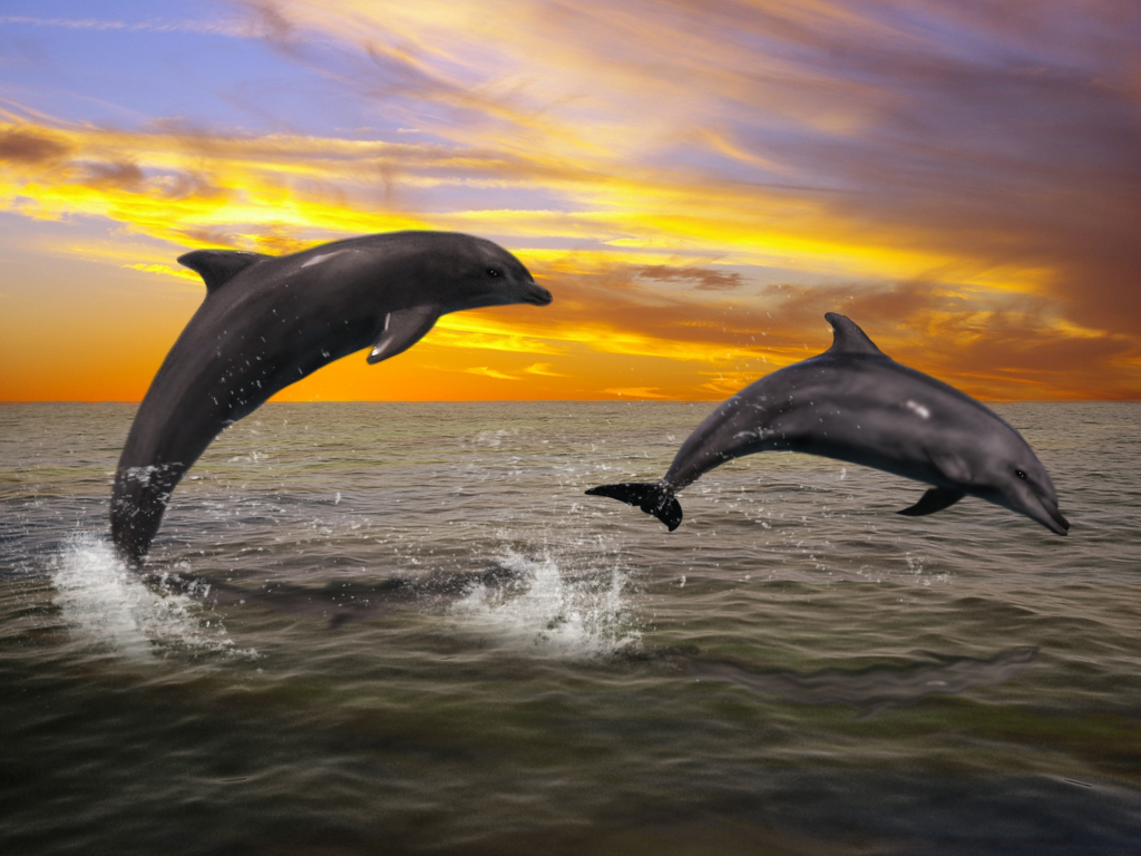 Dolphins At Sunset By AMDG Graphics