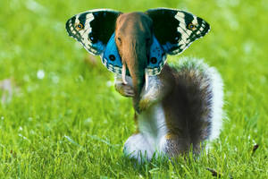 Elephant Butterfly Squirrel by Alex321432