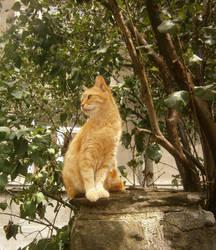 Ginger by andromeda-ek