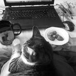 Cat, Coffee and Cookies (all you need for work)