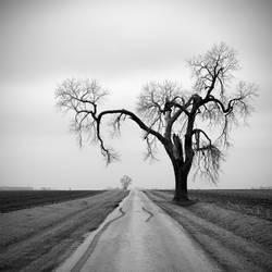 over the road by kuru93